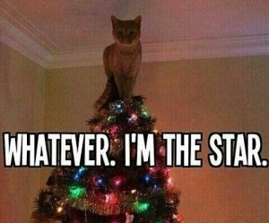 Whatever i'm the star