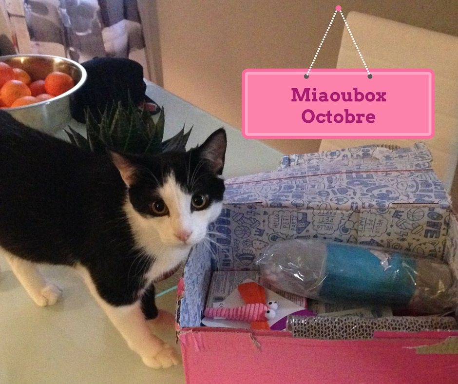 Miaoubox octobre 2015